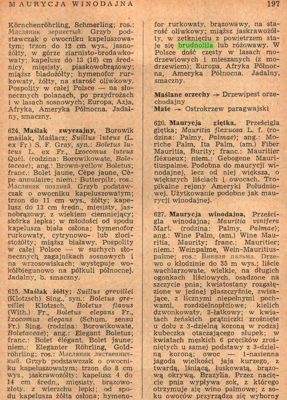 (...) 14 cm średn., mięsisty, brązowozłoty, z wierzchu lepki ; od spodu kapelusza żółta osłona; hymeno- 197 for rurkowaty, brązowawy, na starość oliwkowy; miąższ jaskrawożółty, w zetknięciu z powietrzem staje się brudnolila lub różowawy. W Polsce dość częsty w lasach modrzewiowych i mieszanych (z modrzewiem); Europa, Afryka Północna, Ameryka Północna. Jadalny, smaczny...