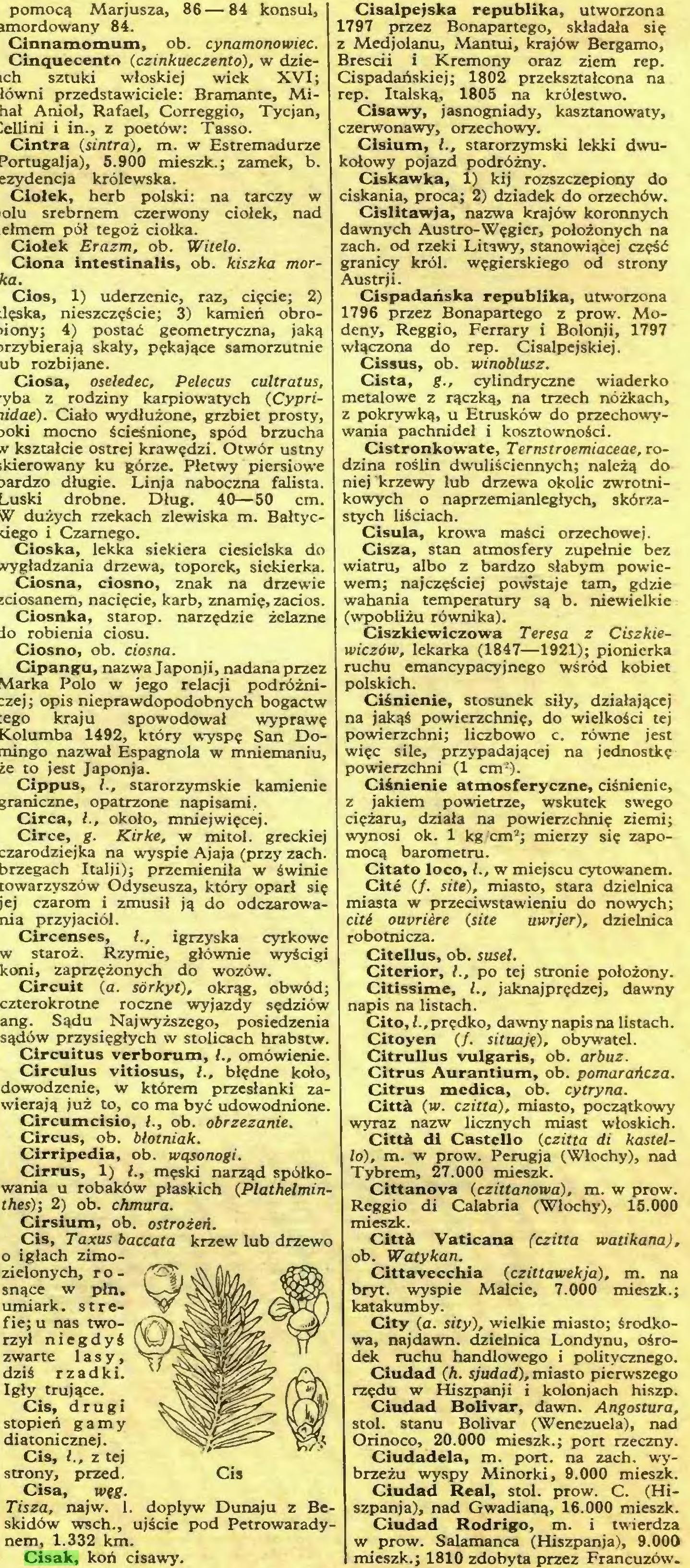 (...) Cisak, koń cisawy. Cisalpejska republika, utworzona 1797 przez Bonapartego, składała się z Medjolanu, Man tui, krajów Bergamo, Bresdi i Krcmony oraz ziem rep...
