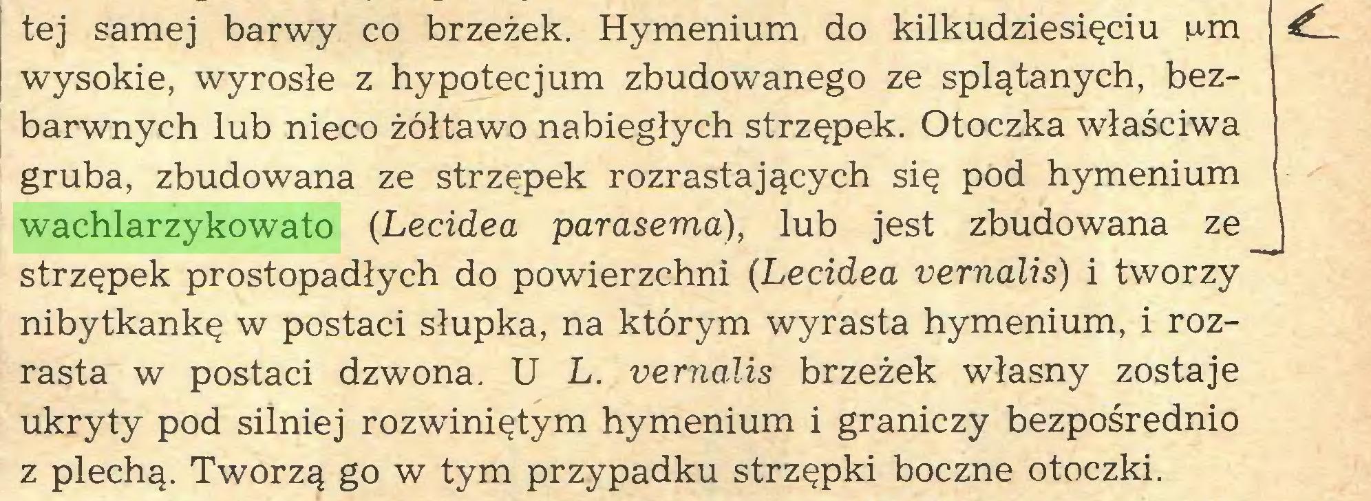 (...) tej samej barwy co brzeżek. Hymenium do kilkudziesięciu ¡urn ¿L wysokie, wyrosłe z hypotecjum zbudowanego ze splątanych, bezbarwnych lub nieco żółtawo nabiegłych strzępek. Otoczka właściwa gruba, zbudowana ze strzępek rozrastających się pod hymenium wachlarzykowato (Lecidea parasema), lub jest zbudowana ze \ strzępek prostopadłych do powierzchni (Lecidea vernalis) i tworzy nibytkankę w postaci słupka, na którym wyrasta hymenium, i rozrasta w postaci dzwona. U L. vernalis brzeżek własny zostaje ukryty pod silniej rozwiniętym hymenium i graniczy bezpośrednio z plechą. Tworzą go w tym przypadku strzępki boczne otoczki...