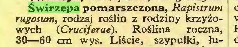 (...) Świrzepa pomarszczona, Rapistrum rugosum, rodzaj roślin z rodziny krzyżowych (Cruciferae). Roślina roczna, 30—60 cm wys. Liście, szypułki, łu...