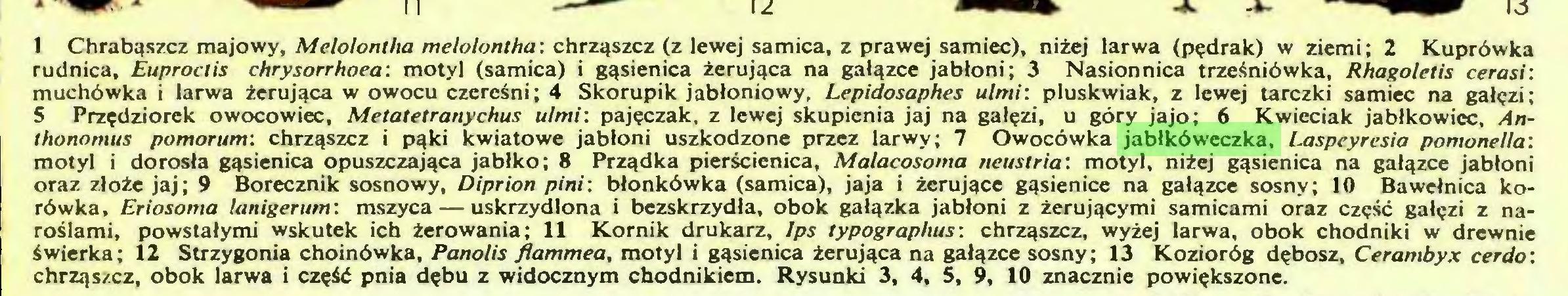 (...) 1 Chrabąszcz majowy, Melolontha melolontha: chrząszcz (z lewej samica, z prawej samiec), niżej larwa (pędrak) w ziemi; 2 Kuprówka rudnica, Euproclis chrysorrhoea: motyl (samica) i gąsienica żerująca na gałązce jabłoni; 3 Nasionnica trześniówka, Rhagoletis cerasi: muchówka i larwa żerująca w owocu czereśni; 4 Skorupik jabłoniowy, Lepidosaphes ulmi: pluskwiak, z lewej tarczki samiec na gałęzi; S Przędziorek owocowiec, Metatetranychus ulmi: pajęczak, z lewej skupienia jaj na gałęzi, u góry jajo; 6 Kwieciak jablkowicc, Anthonomus pomorum: chrząszcz i pąki kwiatowe jabłoni uszkodzone przez larwy; 7 Owocówka jabłkóweczka, Laspeyresia pomonella: motyl i dorosła gąsienica opuszczająca jabłko; 8 Prządka pierścienica, Malacosoma neustria: motyl, niżej gąsienica na gałązce jabłoni oraz złoże jaj; 9 Borecznik sosnowy, Diprion pini: błonkówka (samica), jaja i żerujące gąsienice na gałązce sosny; 10 Bawełnica korówka, Eriosoma lanigerum: mszyca — uskrzydlona i bezskrzydła, obok gałązka jabłoni z żerującymi samicami oraz część gałęzi z naroślami, powstałymi wskutek ich żerowania; 11 Kornik drukarz, Ips typographus: chrząszcz, wyżej larwa, obok chodniki w drewnie świerka; 12 Strzygonia choinówka, Panolis flammea, motyl i gąsienica żerująca na gałązce sosny; 13 Kozioróg dębosz, Cerambyx cer do: chrząszcz, obok larwa i część pnia dębu z widocznym chodnikiem. Rysunki 3, 4, 5, 9, 10 znacznie powiększone...