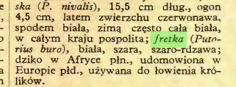 (...) ska (P. nivalis), 15,5 cm dług., ogon 4,5 cm, latem zwierzchu czerwonawa, spodem biała, zimą często cała biała, w całym kraju pospolita; fretka (Putorius buro), biała, szara, szaro-rdzawa; dziko w Afryce płn., udomowiona w Europie płd., używana do łowienia królików...