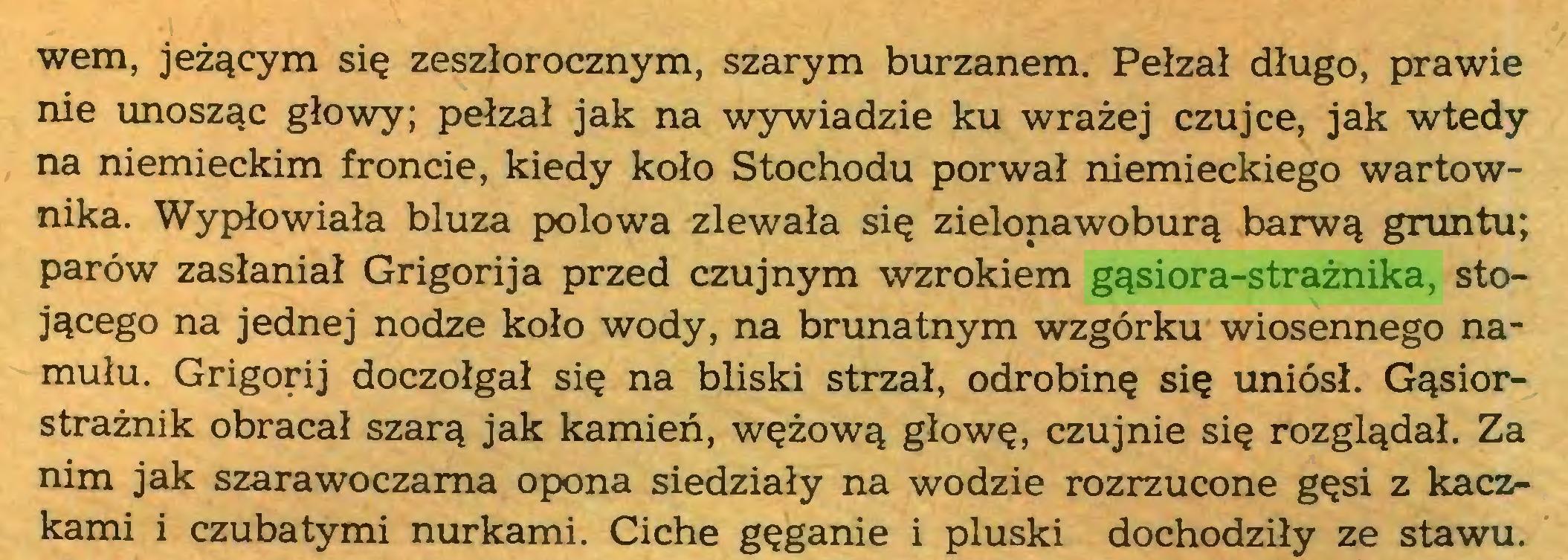 (...) wem, jeżącym się zeszłorocznym, szarym burzanem. Pełzał długo, prawie nie unosząc głowy; pełzał jak na wywiadzie ku wrażej czujce, jak wtedy na niemieckim froncie, kiedy koło Stochodu porwał niemieckiego wartownika. Wypłowiała bluza połowa zlewała się zielonawoburą barwą gruntu; parów zasłaniał Grigorija przed czujnym wzrokiem gąsiora-strażnika, stojącego na jednej nodze koło wody, na brunatnym wzgórku wiosennego namułu. Grigorij doczołgał się na bliski strzał, odrobinę się uniósł. Gąsiorstrażnik obracał szarą jak kamień, wężową głowę, czujnie się rozglądał. Za nim jak szarawoczama opona siedziały na wodzie rozrzucone gęsi z kaczkami i czubatymi nurkami. Ciche gęganie i pluski dochodziły ze stawu...