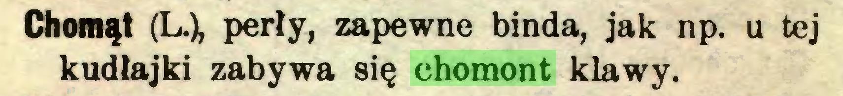 (...) Chomąt (L.), perły, zapewne binda, jak np. u tej kudłajki zabywa się chomont klawy...