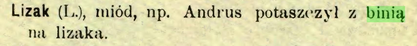 (...) Lizak (L.), miód, np. Andrus potaszczyl z binią na lizaka...
