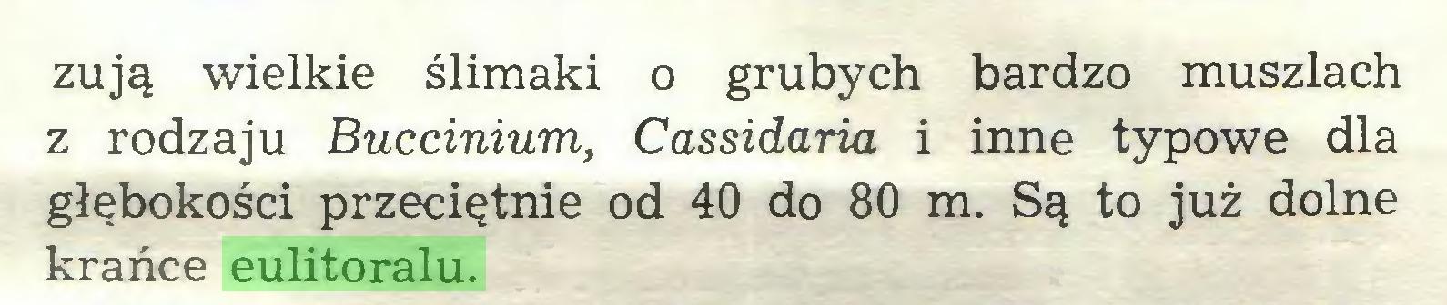 (...) żują wielkie ślimaki o grubych bardzo muszlach z rodzaju Buccinium, Cassidaria i inne typowe dla głębokości przeciętnie od 40 do 80 m. Są to już dolne krańce eulitoralu...