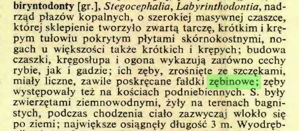 (...) biryntodonty [gr.], Stegocephalia, Labyrinthodontia, nadrząd płazów kopalnych, o szerokiej masywnej czaszce, której sklepienie tworzyło zwartą tarczę, krótkim i krępym tułowiu pokrytym płytami skórnokostnymi, nogach u większości także krótkich i krępych; budowa czaszki, kręgosłupa i ogona wykazują zarówno cechy rybie, jak i gadzie; ich zęby, zrośnięte ze szczękami, miały liczne, zawile poskręcane fałdki zębinowe; zęby występowały też na kościach podniebiennych. S. były zwierzętami ziemnowodnymi, żyły na terenach bagnistych, podczas chodzenia ciało zazwyczaj wlokło się po ziemi ; największe osiągnęły długość 3 m. Wyodręb...