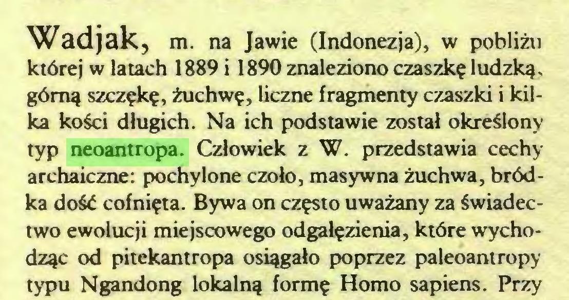 (...) Wadjak, m. na Jawie (Indonezja), w pobliżu której w latach 1889 i 1890 znaleziono czaszkę ludzką, górną szczękę, żuchwę, liczne fragmenty czaszki i kilka kości długich. Na ich podstawie został określony typ neoantropa. Człowiek z W. przedstawia cechy archaiczne: pochylone czoło, masywna żuchwa, bródka dość cofnięta. Bywa on często uważany za świadectwo ewolucji miejscowego odgałęzienia, które wychodząc od pitekantropa osiągało poprzez paleoantropy typu Ngandong lokalną formę Homo sapiens. Przy...