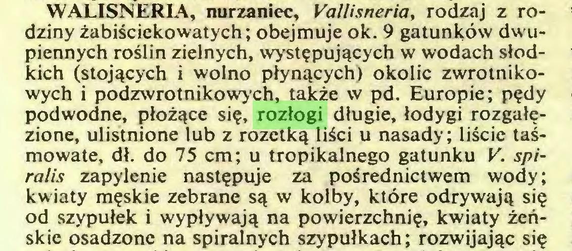 (...) WALISNERIA, nurzaniec, Vallisneria, rodzaj z rodziny zabilciekowatych; obejmuje ok. 9 gatunköw dwupiennych roslin zielnych, wyst^puj^cych w wodach slodkich (stoj^cych i wolno plynqcych) okolic zwrotnikowych i podzwrotnikowych, lakze w pd. Europie; p?dy podwodne, ploz^ce si?, rozlogi dlugie, lodygi rozgal^zione, ulistnione lub z rozetka lisci u nasady; liscie tasmowate, dl. do 75 cm; u tropikalnego gatunku V. spiralis zapylenie nast?puje za posrednictwem wody; kwiaty m?skie zebrane sq w kolby, ktöre odrywaj^ si§ od szypulek i wyplywaja na powierzchni?, kwiaty zenskie osadzone na spiralnych szypulkach; rozwijaj^c si?...