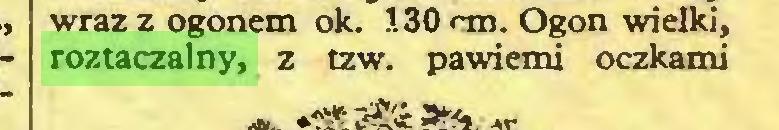 (...) wraz z ogonem ok. 130 cm. Ogon wielki, roztaczalny, z tzw. pawiemi oczkami...
