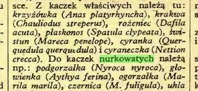 (...) sce. Z kaczek właściwych należą tu: krzyżówka (Anas p/atyrhyncha), krakwa (Chauliodus streperus), rożeniec (Dafila acata), płaskonos (Spatuła clypeata), świstun (Marcea penelope), cyranka (Querąueduła ąuerąutdula) i cyraneczka (Nettion creced). Do kaczek nurkowatych należą np.: podgorzałka (Nyroca nytoca), głowienka (Aythya ferina), ogorzałka (Mania mariła), czernica (M. fuligula), uhla...