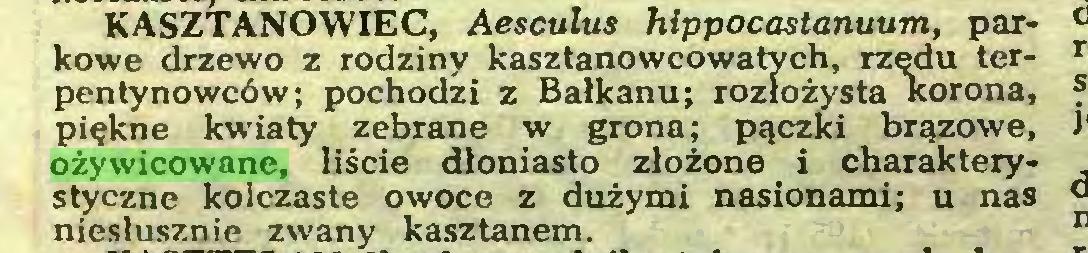 (...) KASZTANOWIEC, Aesculus hippocastanuum, parkowe drzewo z rodziny kasztanowcowatych, rzędu terpen tynowców; pochodzi z Bałkanu; rozłożysta korona, piękne kwiaty zebrane w grona; pączki brązowe, ożywicowane, liście dloniasto złożone i charakterystyczne kolczaste owoce z dużymi nasionami; u nas niesłusznie zwany kasztanem...